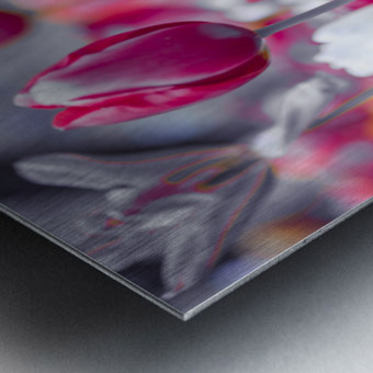 Colorful Tulip flowers Metal print