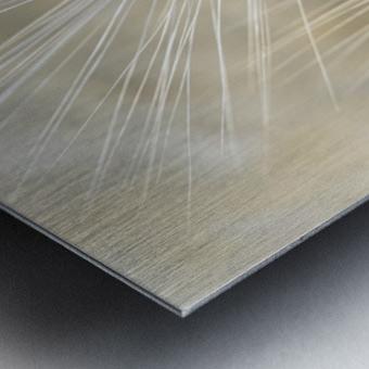 Wheat close-up Metal print
