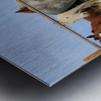 Little Bighorn Ponies Metal print
