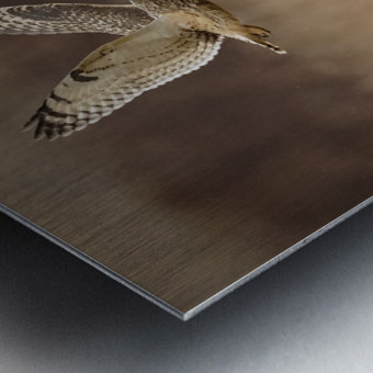 Wesley Allen Shaw 02133 Metal print