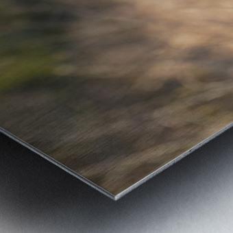 Wesley Allen Shaw 08787 Metal print