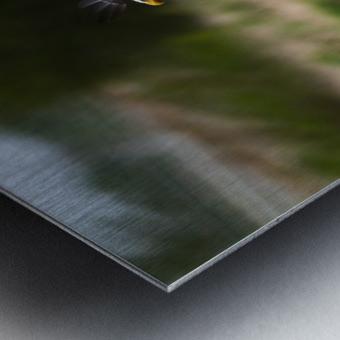 Wesley Allen Shaw 04650 Metal print