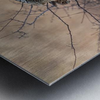 Wesley Allen Shaw 09307 Metal print