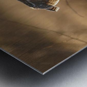 Wesley Allen Shaw 08859 Metal print