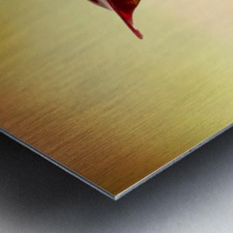 MG 2275 2 Metal print