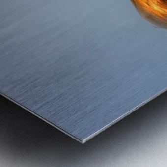 ---Balance of life---           Ltd edition of 5 -2 left Metal print