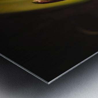 Etude Zen 3h Metal print