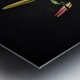 Etude Zen 4f Metal print