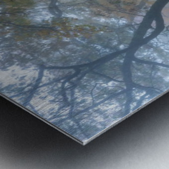 Treeline apmi 1867 Metal print