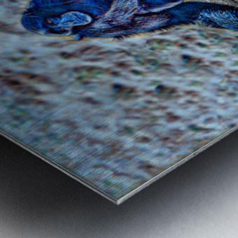 Siamang Metal print