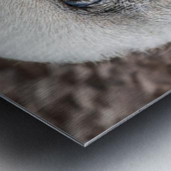 Buzzard Metal print