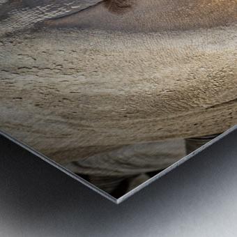 Rhinoceros 2 Metal print