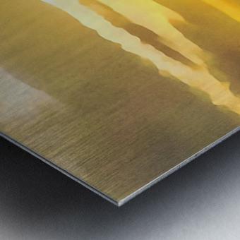 golden evening Metal print