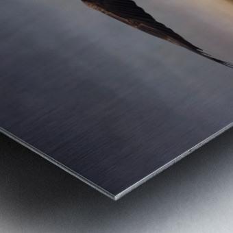 Raptor Skies Metal print