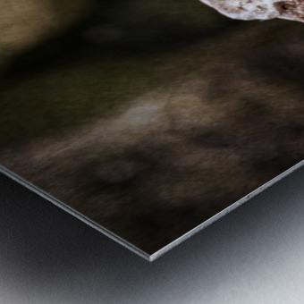 The Last Meal Metal print