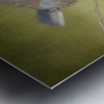 Dark Eyed Junco with Texture Metal print