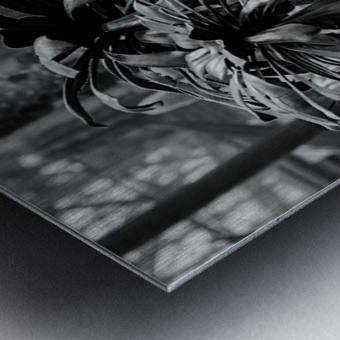 Desert in Black White Metal print