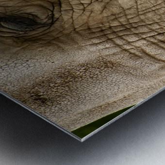 Wrinkles  Elephant  Metal print