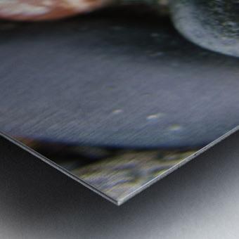 Sea Glass and Seashell Metal print