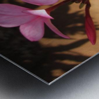 Pink Plumeria Metal print