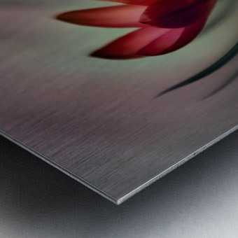 Krokus Metal print