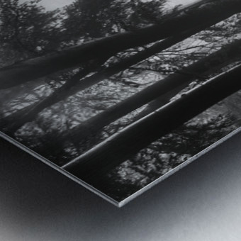The first light... Metal print