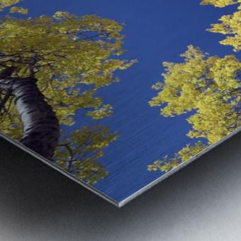 Forest During Autumn, Kananaskis, Alberta, Canada Metal print