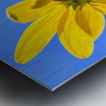 Yellow flower against a blue sky; Bolivia Metal print