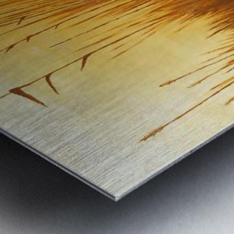 American Wigeon Metal print