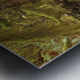 Water flowing through tree roots at Opal Creek Wilderness, Oregon Metal print