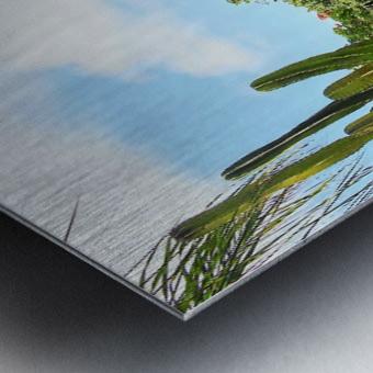Nevis cactus Metal print