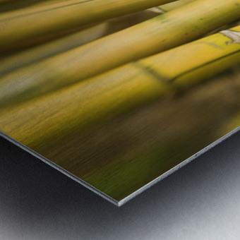 Close-Up Of Bamboo Stalks. Metal print