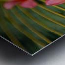Close-Up Three Pink Plumeria Flowers On Coconut Palm Leaf Selective Focus Metal print