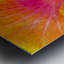 Close-up macro shot of a beautiful orange, pink and yellow Hibiscus flower; Honolulu, Oahu, Hawaii, United States of America Metal print