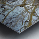 another narley old tree Impression metal