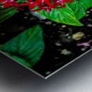 Beauty in the Flower Metal print