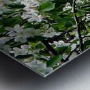 DazzleBlossoms Metal print
