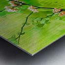 Green Spring Metal print