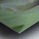 Yellow Iris Photograph Metal print