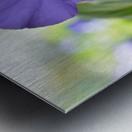 Blue Pansy Photograph Impression metal