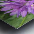 Butterfly on Wildflower Metal print
