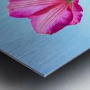 Pink flower and green leaves Metal print