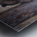 _T8C3739 Modifier Metal print