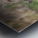 _T8C7860 Metal print