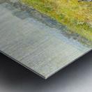 Woodland Pond Metal print