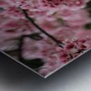 Sakura  Metal print