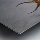Waterbuck Metal print