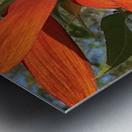 Sunflower seeds  Impression metal