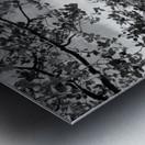 DSC01173 Metal print