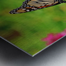 Monarch In The Garden Metal print